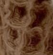 Waffel - caramel